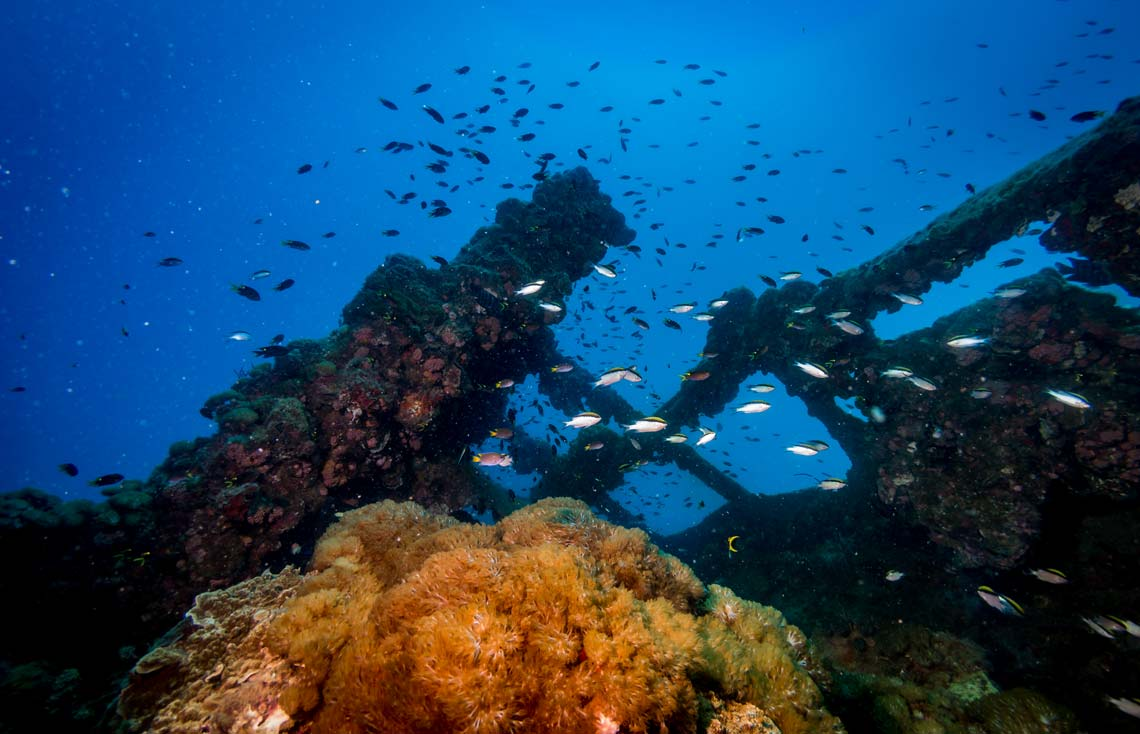 scuba dive the yongala wreck