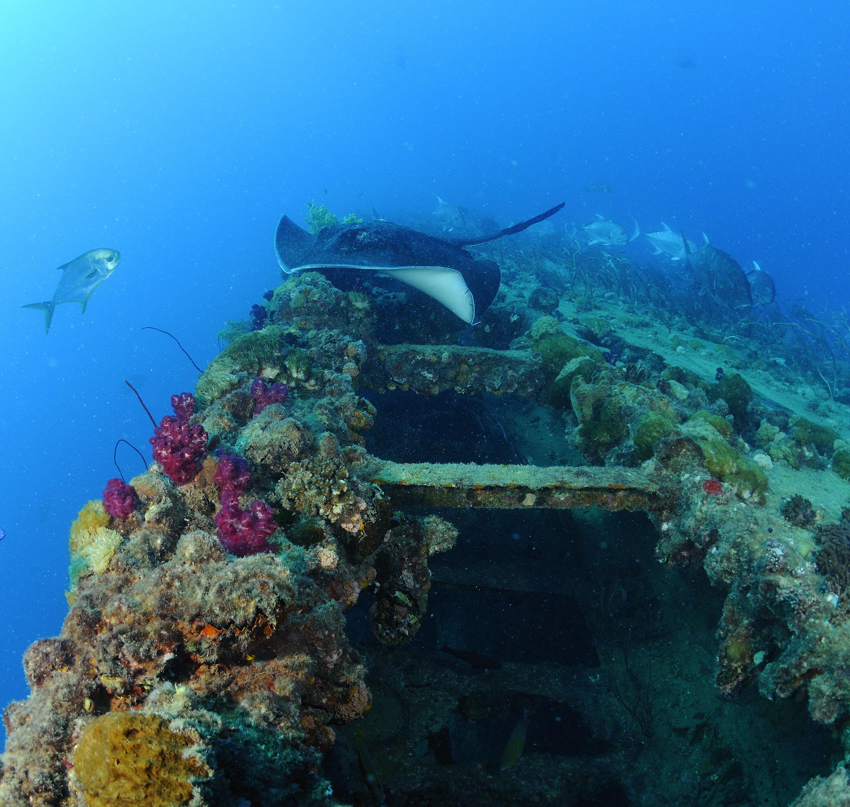 SS Yongala Wreck dive